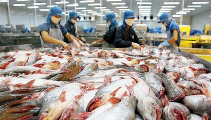 Xuất khẩu cá tra: ASEAN sẽ tiếp tục là thị trường tiềm năng