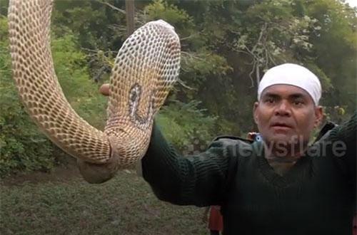CLIP: Cận cảnh quá trình giải cứu rắn hổ mang khỏi vỏ ốc sên