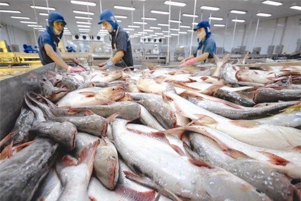 Xuất khẩu cá tra sang Mexico: Thị trường khả quan và đáng lưu tâm