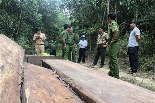 Đắk Lắk: Khởi tố 3 đối tượng nhận phá rừng thuê