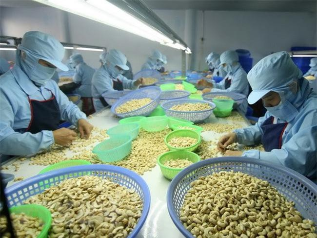 Chế biến hạt điều xuất khẩu. (Ảnh: TTXVN).