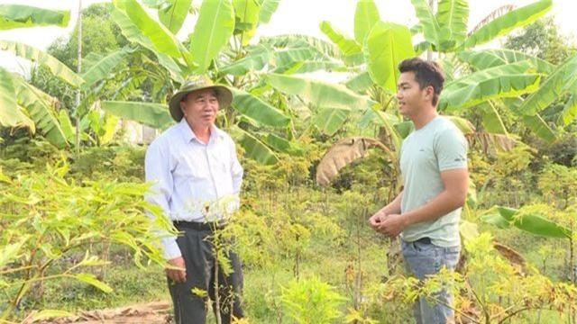 Phú Yên: kiếm cả chục triệu đồng từ trồng cây đinh lăng lấy củ - 3