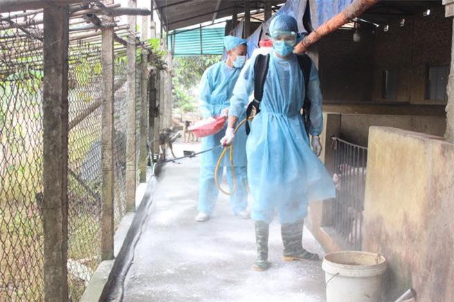 Cán bộ thú y xã Cát Quế (huyện Hoài Đức) phun thuốc phòng, chống bệnh Dịch tả lợn Châu Phi. (Ảnh: HNMO)