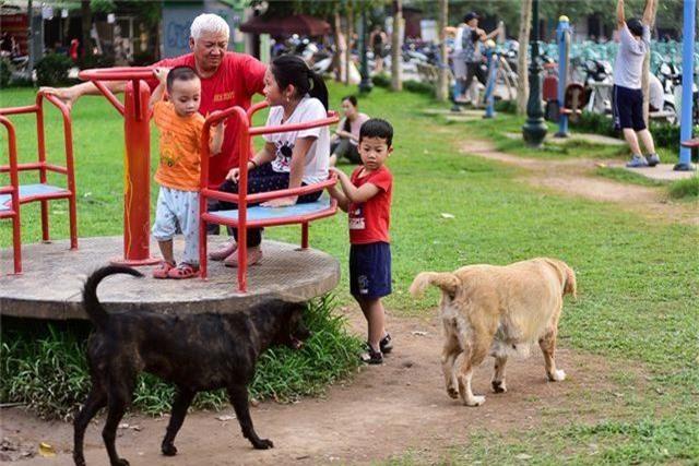 Nhiều người dân Hà Nội quen thả rông chó không rọ mõm - 2