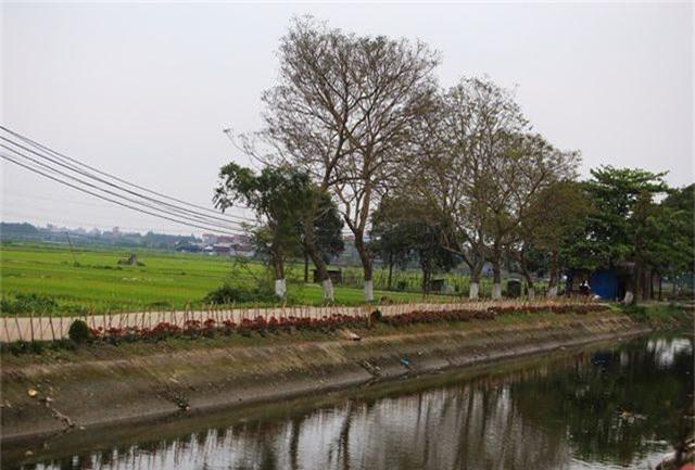 Kênh ngập rác thải biến thành đường hoa ở Hà Nội - 9