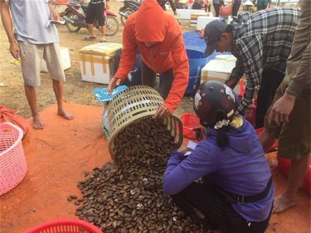 Ngư dân Hà Tĩnh phấn khởi vì trúng đậm sò lụa - 4