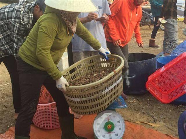 Ngư dân Hà Tĩnh phấn khởi vì trúng đậm sò lụa - 6