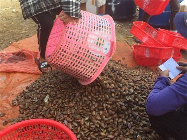 Ngư dân Hà Tĩnh phấn khởi vì trúng đậm sò lụa - 7