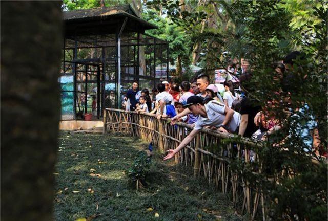 Vườn thú, công viên Hà Nội đông nghịt người trong ngày nghỉ lễ - 6