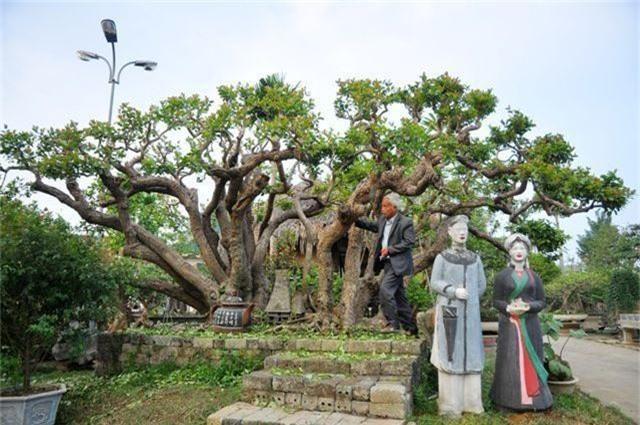 Choáng ngợp những vườn cây triệu đô độc nhất, vô nhị của đại gia Việt - 10