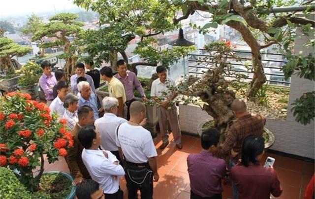 Choáng ngợp những vườn cây triệu đô độc nhất, vô nhị của đại gia Việt - 12