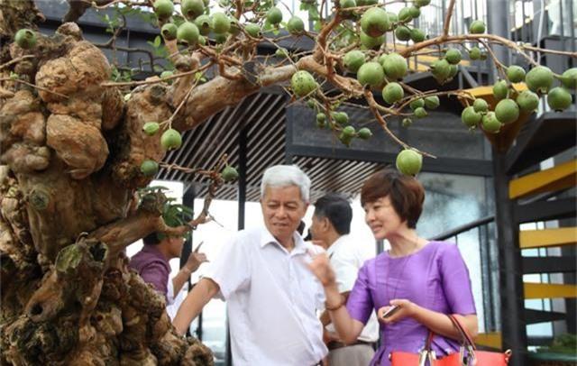 Choáng ngợp những vườn cây triệu đô độc nhất, vô nhị của đại gia Việt - 13