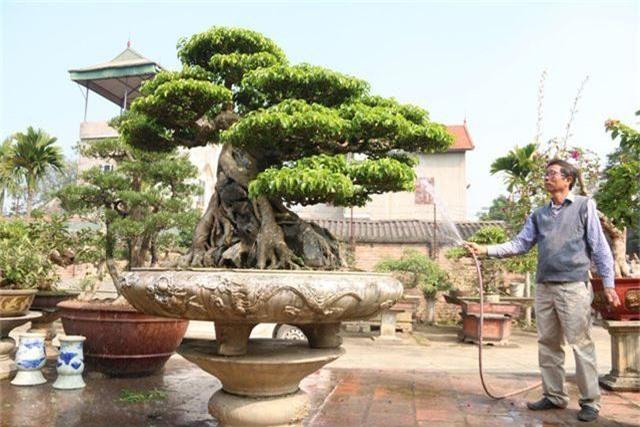 Choáng ngợp những vườn cây triệu đô độc nhất, vô nhị của đại gia Việt - 4
