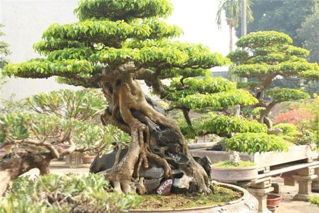 Choáng ngợp những vườn cây triệu đô độc nhất, vô nhị của đại gia Việt - 5