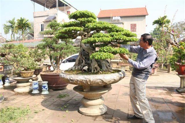 Choáng ngợp những vườn cây triệu đô độc nhất, vô nhị của đại gia Việt - 7