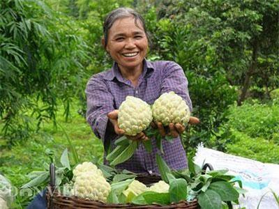 """Lạng Sơn: Cả làng trồng quả """"mở mắt"""" thu gần 100 tỷ đồng mỗi năm"""