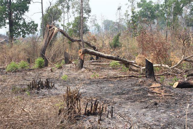 """Gia Lai: Phát hiện hơn 4ha rừng bị """"chặt phá, đốt trụi"""""""