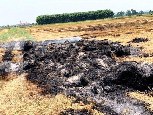 Quảng Bình: Bị đốt gần 1.000 cuộn rơm vì không đồng ý đóng tiền bảo kê cánh đồng