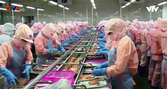 Xuất khẩu tôm sang thị trường Nhật Bản đã có những dấu hiệu khả quan kể từ đầu năm nay.