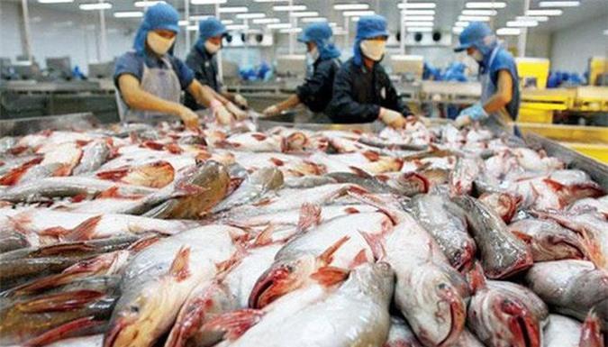 Từ trước đến nay Nhật Bản chưa lần nào lọt vào top 10 thị trường nhập khẩu lớn cá tra Việt Nam.