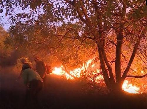 CLIP: Cháy rừng phòng hộ ven biển tại Quảng Bình
