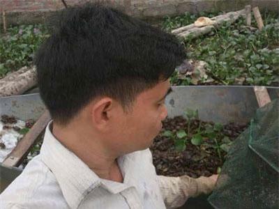 """Hà Hội: Sau rắn mòng, chàng """"Quách Tĩnh"""" lại kiếm bộn tiền từ nuôi cua đồng"""