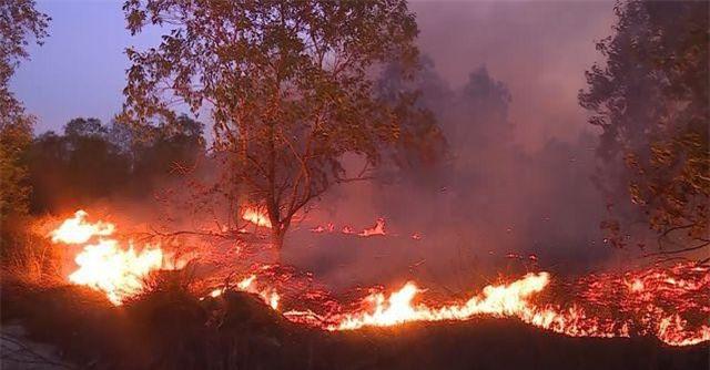 Quảng Bình: 15ha rừng bị thiêu rụi sau 5 giờ hỏa hoạn