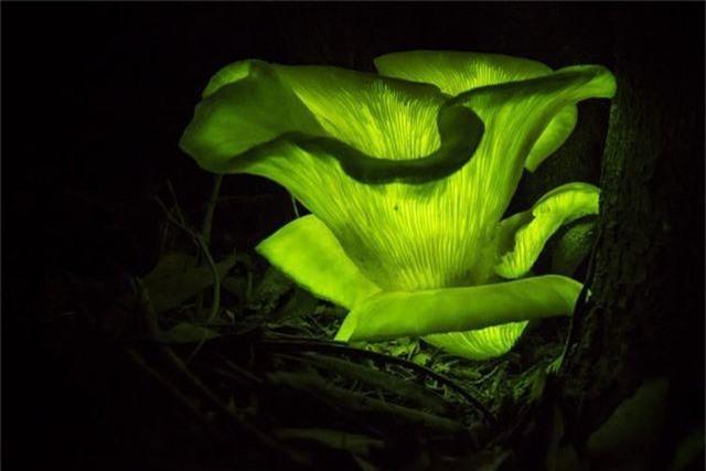 Những điểm đến có thiên nhiên tuyệt đẹp về đêm trên trái đất - 5