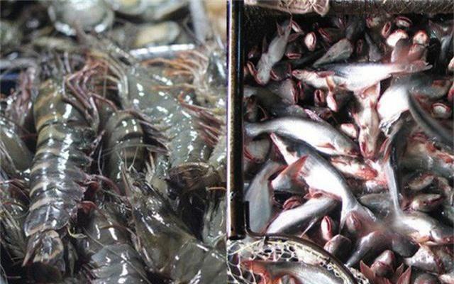 Xuất khẩu thủy sản: Sẽ gặp khó ở Trung Quốc, thuận lợi ở Mỹ - Ảnh 1.