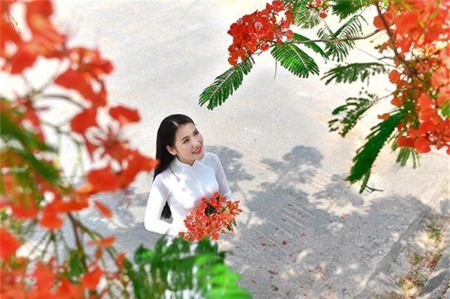 Cô gái xinh đẹp thả hồn trên con đường hoa phượng đỏ Hải Phòng - 20