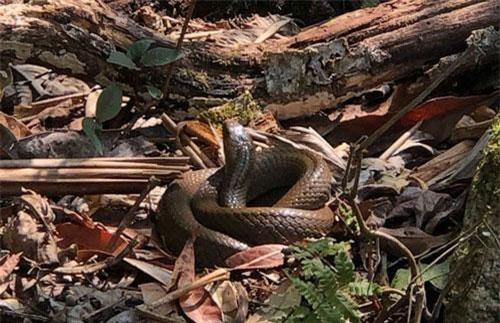 Những con rắn trên dãy Hoàng Liên Sơn.