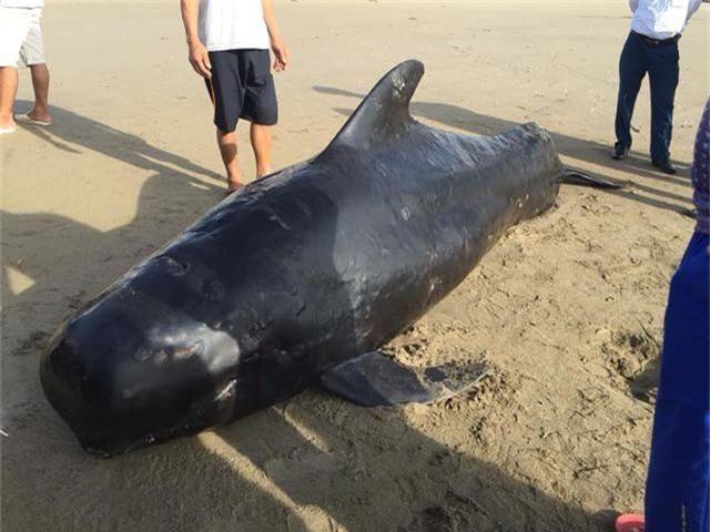 Xác cá voi nặng 1 tấn dạt vào biển Hà Tĩnh - 1
