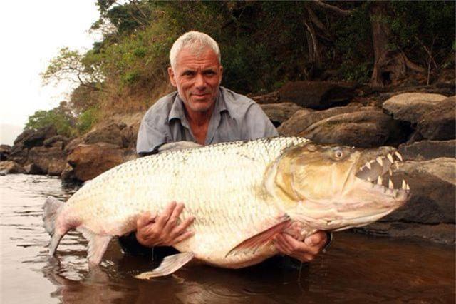 """""""Quái ngư"""" săn mồi cá hổ - Ăn thịt cả cá sấu, gieo rắc nỗi kinh hoàng dưới nước - 4"""