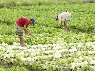 Đồng Tháp: Đẩy mạnh cấp mã số vùng để xuất khẩu nông sản