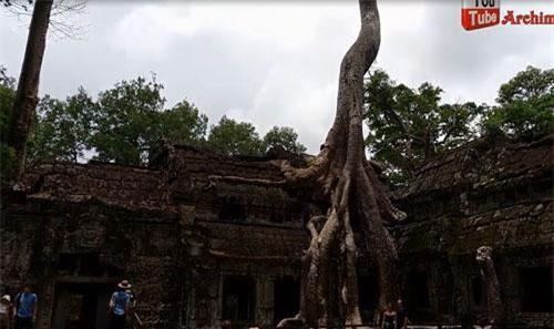 """CLIP: Kỳ lạ ngôi đền bị rễ cây cổ thụ """"nuốt chửng"""" ở Campuchia"""