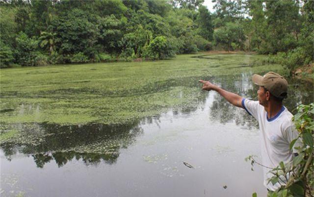 Những bến sông đa năng bị các trang trại chăn nuôi bức tử - 6