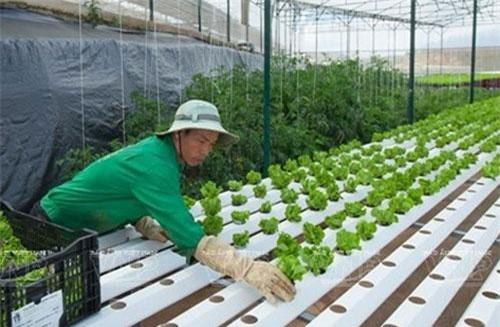 """Sản phẩm nông nghiệp công nghệ cao vẫn """"kén"""" khách hàng"""
