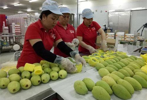 Việt Nam xuất siêu sang 5 thị trường trong khối CPTPP