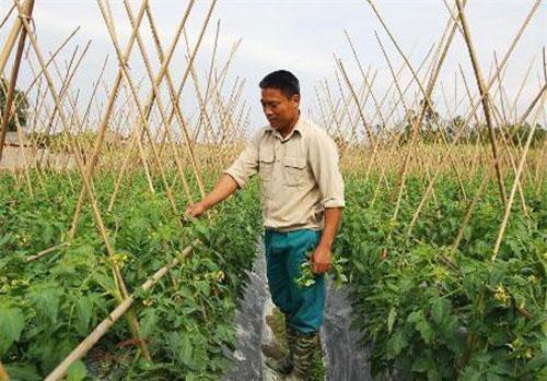 Thái Nguyên: Người thanh niên làm giàu từ mô hình trồng rau quả an toàn