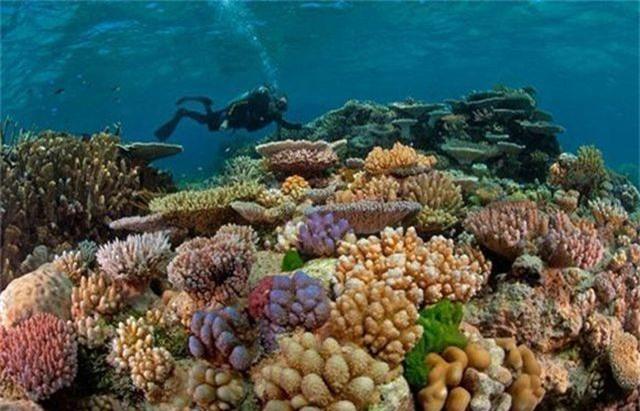 5 điểm ngắm san hô đẹp nhất Việt Nam, nhất định phải khám phá một lần trong đời - 5