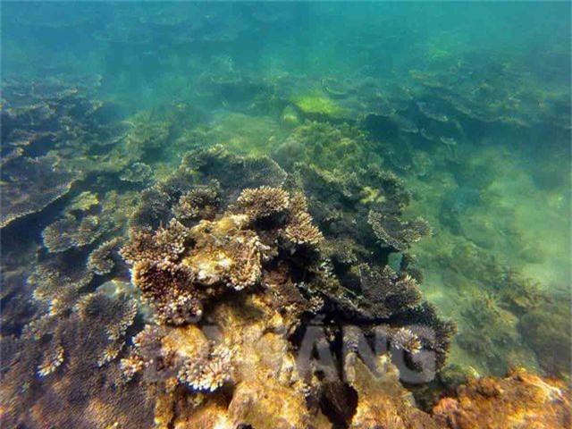 5 điểm ngắm san hô đẹp nhất Việt Nam, nhất định phải khám phá một lần trong đời - 7