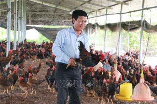 Ông Đặng Xuân Trinh thăm trại nuôi gà. Ảnh: K GỬIH -TTXVN