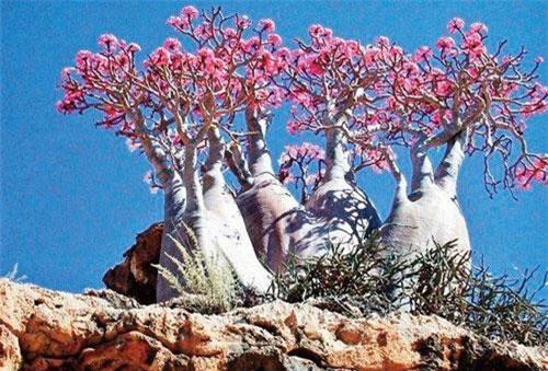 Những loài cây độc nhất thế giới, khiến bạn mất mạng như chơi