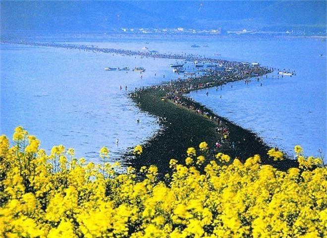 Đến hẹn lại lên: Con đường giữa biển Hàn Quốc 2 năm mới xuất hiện 1 lần, kỳ bí như vậy nhưng người dân vẫn thản nhiên… ăn mừng - Ảnh 10.