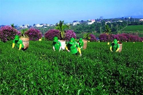 Lâm Đồng có 15 đơn vị sản xuất nông nghiệp thông minh