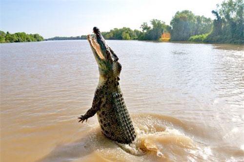 Hãi hùng khoảnh khắc bé trai 10 tuổi đang ngồi trên thuyền thì bị cá sấu lôi xuống nước ăn thịt, người nhà bất lực, chỉ lo chạy thoát thân