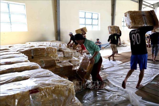 Chế biến cao su tại nhà máy của Tập đoàn Công nghiệp Cao su Việt Nam. Ảnh: Vũ Sinh/TTXVN