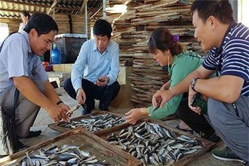 Hàng ngàn tấn cá, mực ở các địa phương bị ùn ứ, không xuất khẩu được vì Trung Quốc thay đổi quy định nhập khẩu