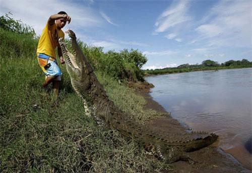 Hình ảnh động vật ấn tượng ghi cảnh người đàn ông cho cá sấu khổng lồ ăn trên bờ sông Tárcoles ở Puntarenas, Costa Rica. (Nguồn Guardian)