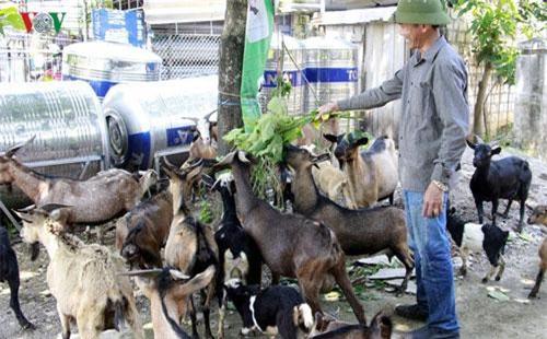 Nụ cười vui vẻ trên khuôn mặt của anh Đinh Anh Tuấn khi cho đàn dê của mình ăn